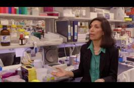 Embedded thumbnail for Dr. Huda Zoghbi selected for 2017 Canada Gairner International Award